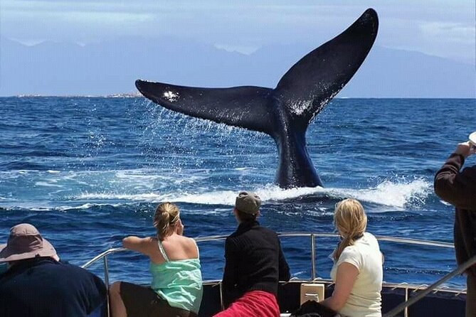Hermanus Whale Watching from Cape Town