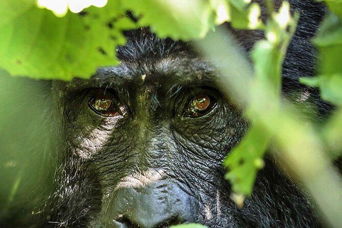 4-Day Bwindi Impenetrable National Park Private Safari Tour