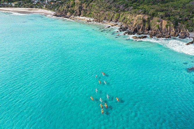 Sortie en kayak de mer dans la baie de Byron avec les dauphins