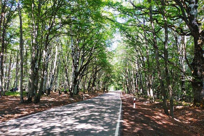 Private Tour to Gudauri from Tbilisi (Sabaduri Forest, Sioni Lake, Ananuri)