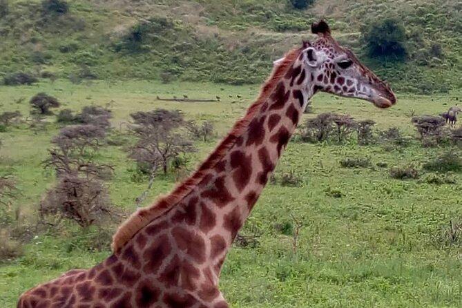 3 Days Safari Mikumi Tanzania from Dar es Salaam with Africa Natural Tours L.t.d