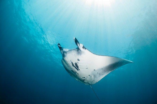 Scuba Diving with Manta Rays at Nusa Penida and Lembongan