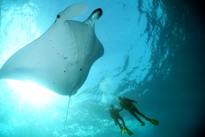 Scuba Diving with Manta Rays at Nusa Penida and Lembongan