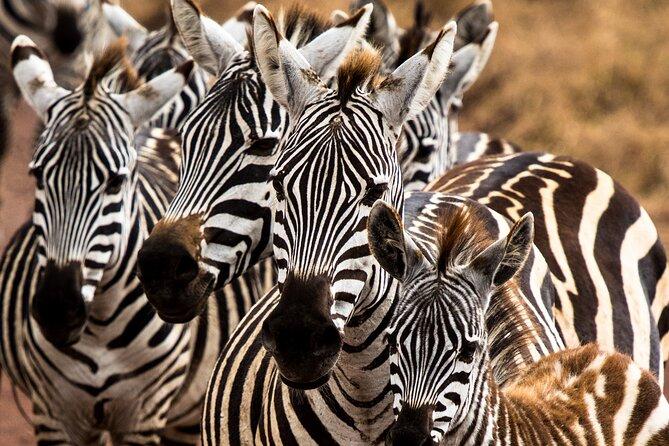Short & Sweet Safari - Arusha, Tarangire, Serengeti and Ngorongoro
