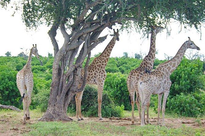 Safari Tour in Stanley and Livingstone Private Game Reserve