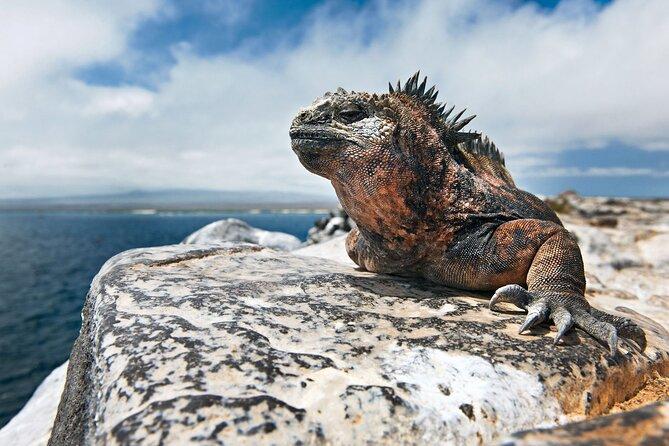 4 Day Galapagos Island Hopping Budget