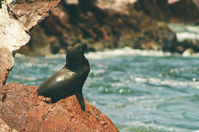 #1 Paracas National Reserve & Ballestas Islands - from Lima (Small Group)