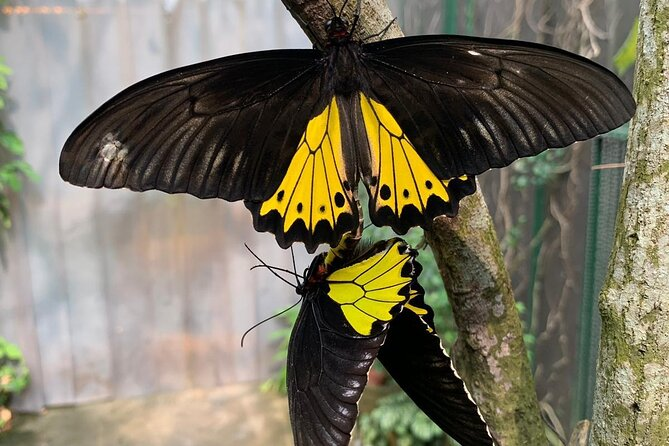 Butterfly Park and Insect Kingdom Admission Ticket