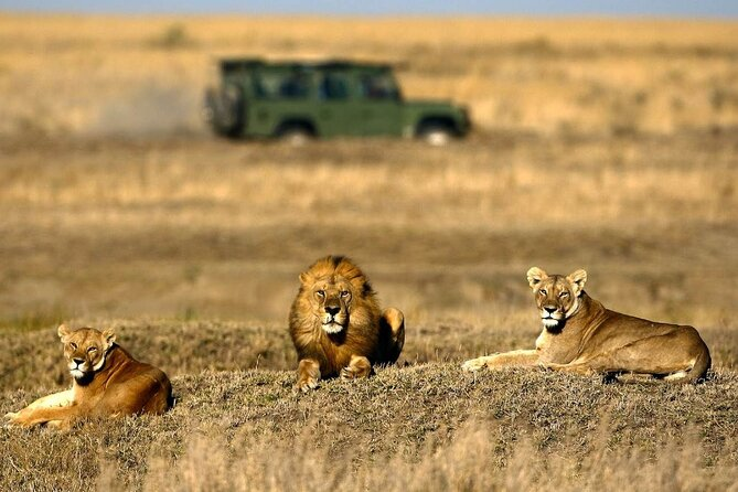 5-Days Camping Safari with Serengeti, Ngorongoro, Lake Manyara & Tarangire N.P