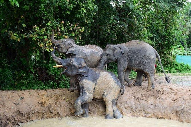 Private Half-Day Elephant Care Samui