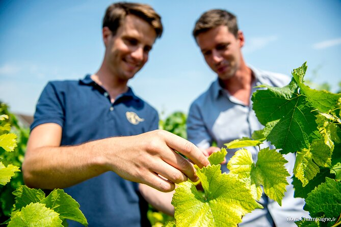Champagne Small-Group Grower Experience with Tasting