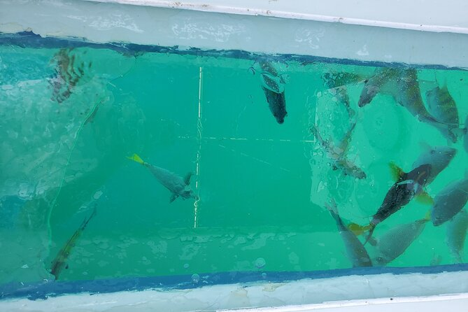 Glass Bottom Boat Tour to the Arch in Cabo San Lucas