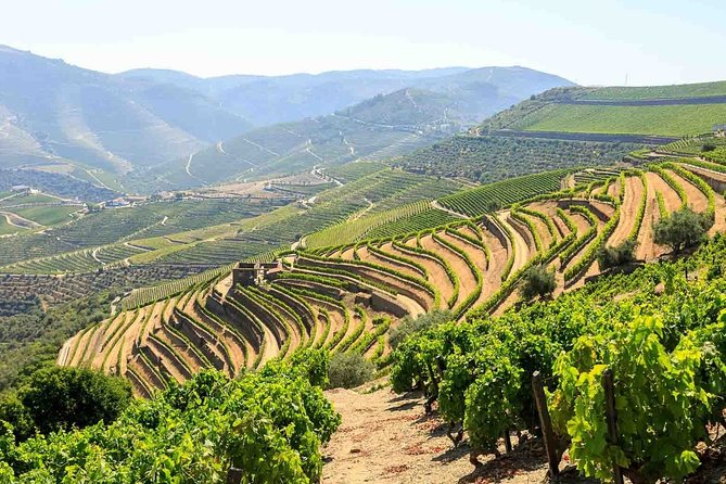 Private Douro Valley Tour Including 3 Wineries