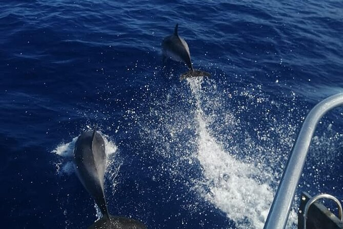 Luxury Cruise in the South of Tenerife