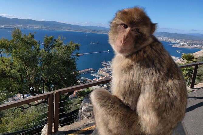 Gibraltar Sightseeing: Monkeys and Panoramic views tour
