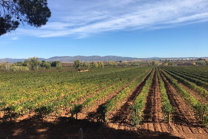 Accessible Valencia: Private, Accessible Wine Tour with Lunch