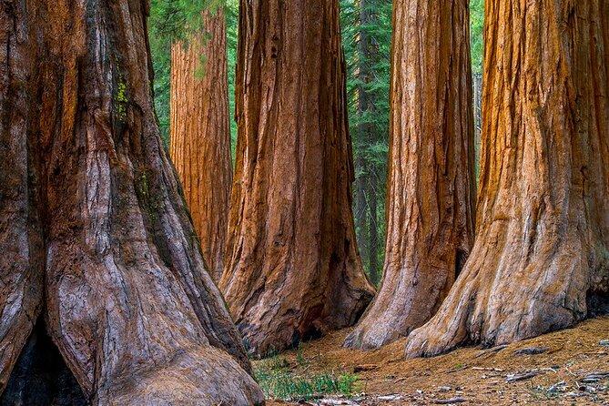 Viagem para pequenos grupos de sequoias e região vinícola, incluindo degustação de vinhos e passeio pela caverna