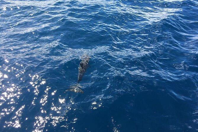 Dolphin Encounter and Kealakekua Bay Reef Snorkel