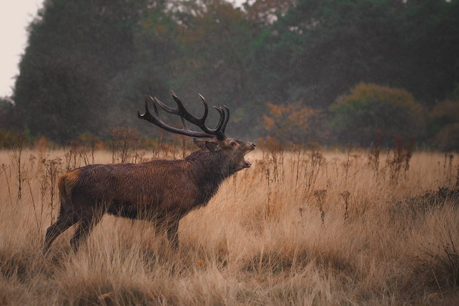 Private Wildlife Photography Tour in London