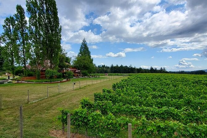 Half-Day Victoria to Cowichan Valley Wine Tour with Tastings