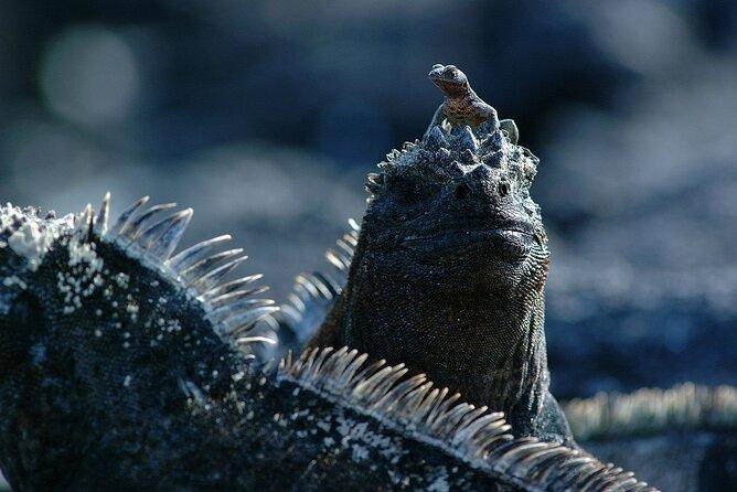 5-Day Galapagos Island Hopping Budget