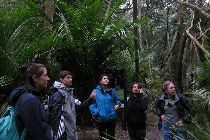 Nature & Kiwi Day Tour from Auckland