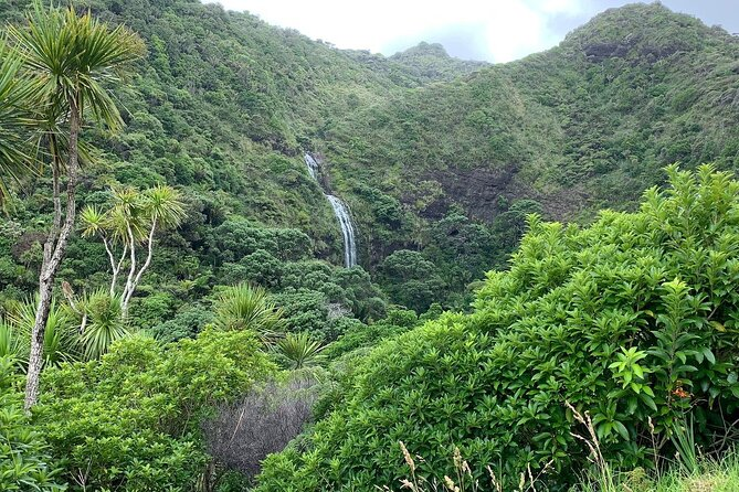 Piha and Karekare Rainforest Wine Tour from Auckland