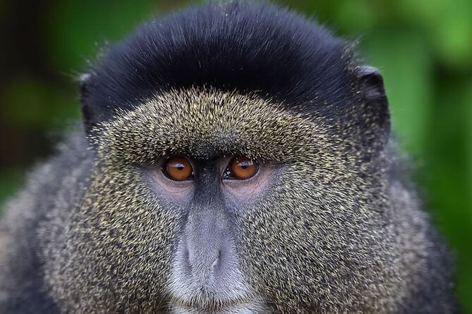 6-Day Gorilla And Golden Monkey Trekking Mgahinga Park