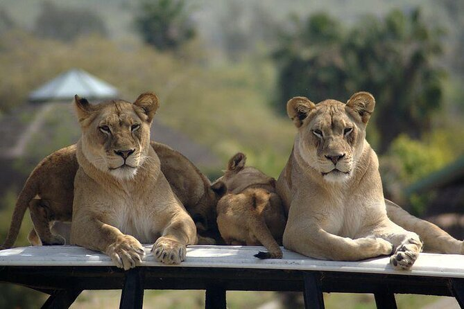 Zoo Safari Park di San Diego