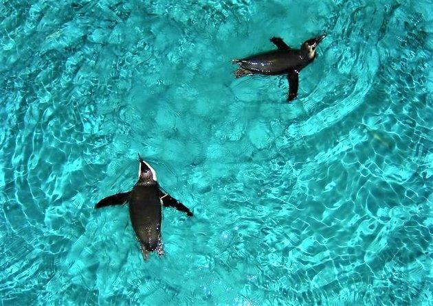 Aquarium van New England