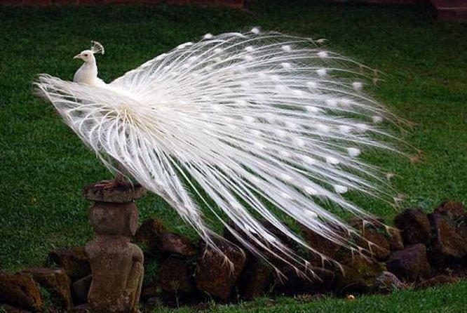 Parque de aves de Bali (Taman Burung Bali)