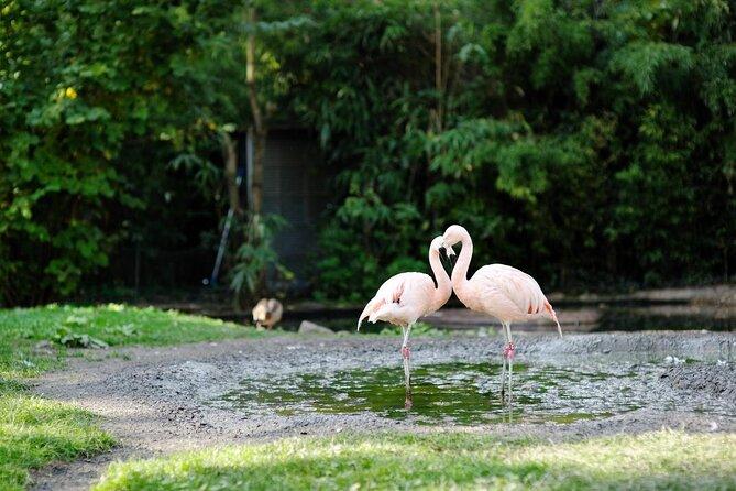 Frankfurt Zoo (Zoologischer Garten Frankfurt)
