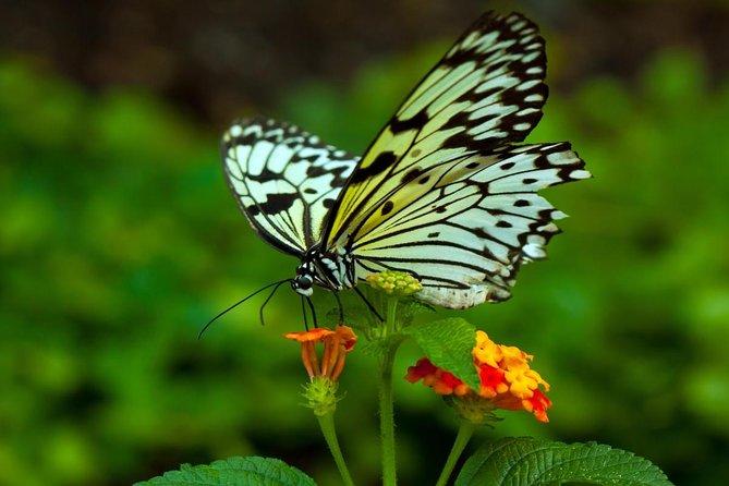 Butterfly Hill Samui