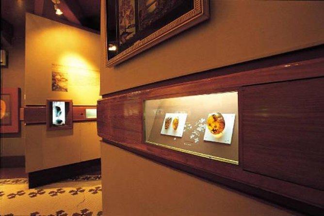 Amber Museum (Museo Del Ámbar)