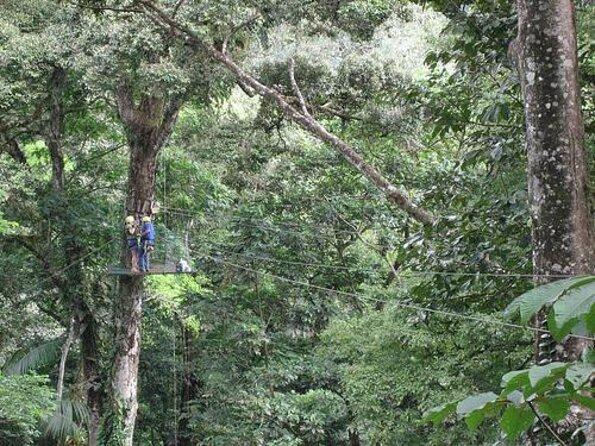 Sarapiqui Canopy