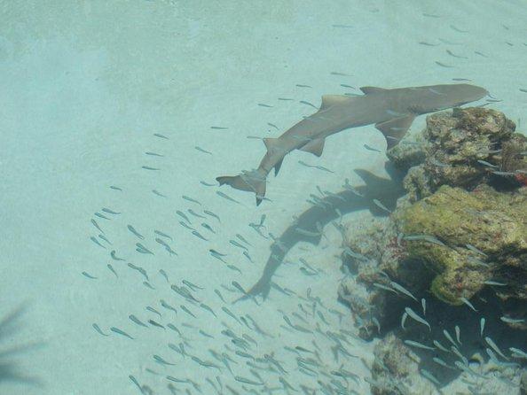 Coral World Ocean Park