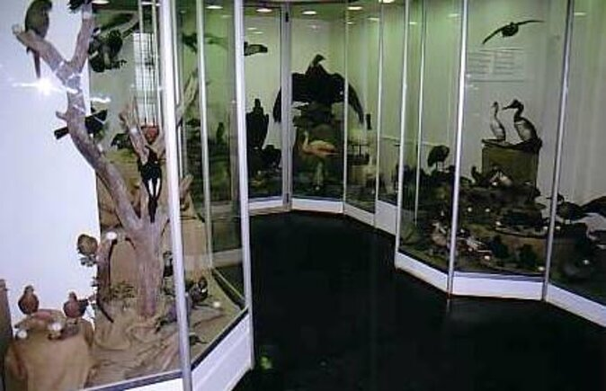 End of the World Museum (Museo del Fin del Mundo)