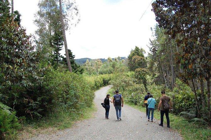 Arvi Park and Piedras Blancas Park (Parque Arvi y Parque Piedras Blancas)