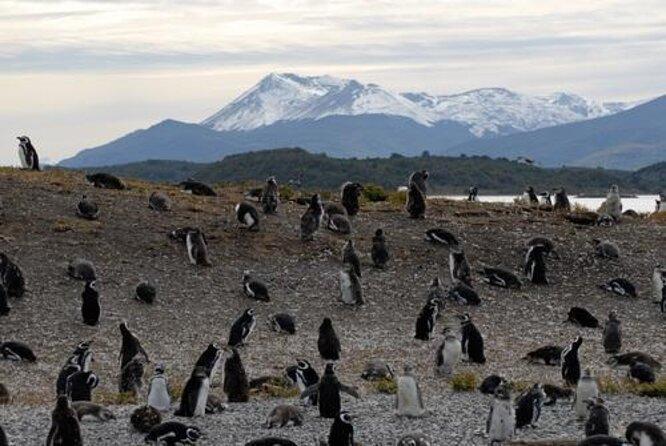 Penguin Island (Isla Yecapasela)