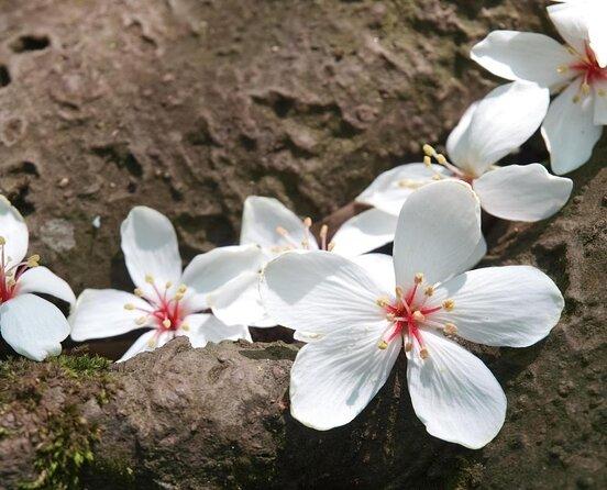 Tucheng Tung Blossom Trail