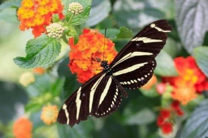 Giardino delle farfalle di Roatán
