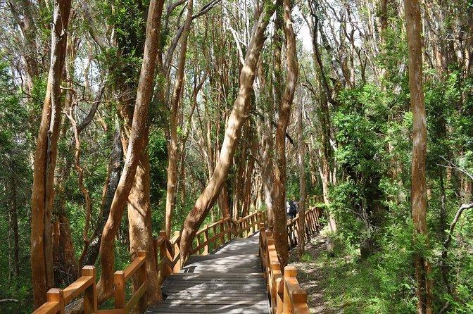 Floresta de Arrayanes (Bosque de Arrayanes)