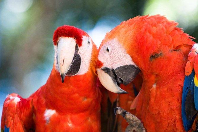 Macaw Mountain Bird Park e Riserva Naturale