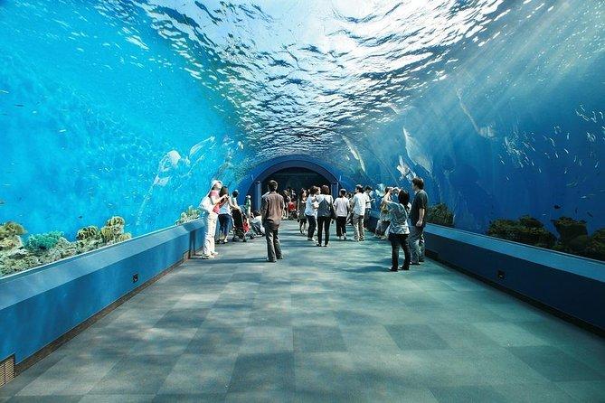 Aquarium des Smokies de Ripley