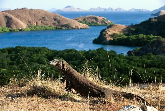 Komodo National Park (Taman Nasional Komodo)