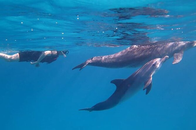 Dolphin House, amazing trip with snorkeling and dolphin watching