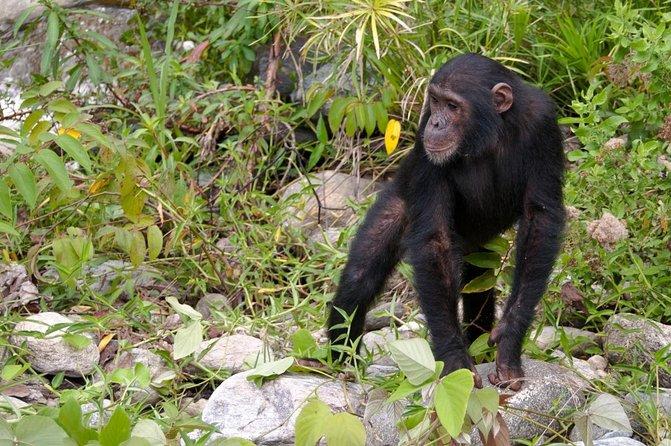Chimp Eden: The Jane Goodall Institute