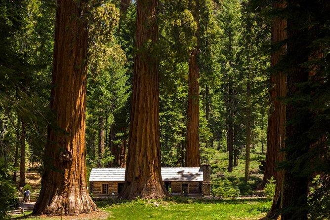 Mariposa Grove van gigantische sequoia's