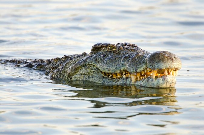 Victoria Falls Crocodile Farm