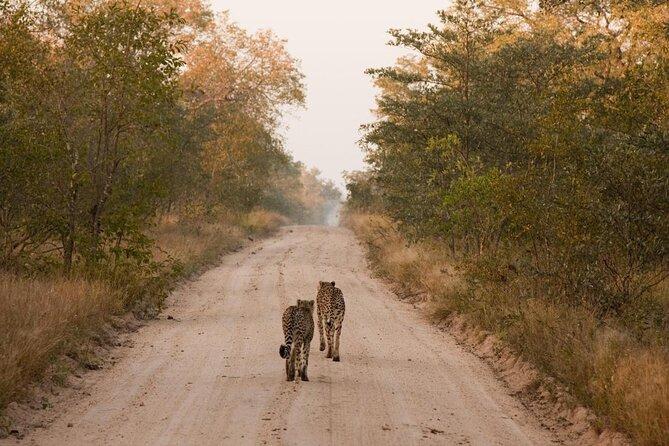 Riserva di caccia di Sabi Sands